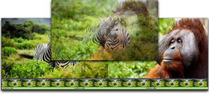 Windows/Macで美しい切替効果を使った本格的な動画編集が簡単にできます